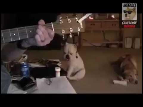 Nirvana Dog